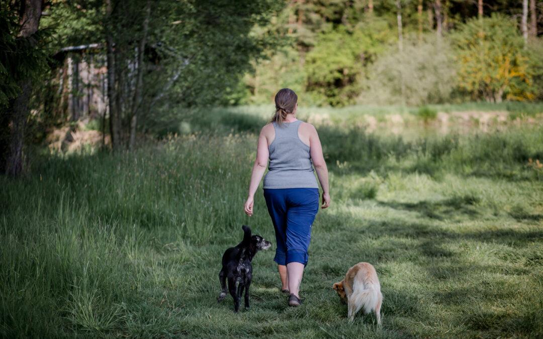 Vyhláška o volném pohybu psů v Českých Budějovicích
