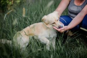 Problematika malých psů